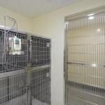 入院室: 入院動物のストレスを和らげるため、入院室は犬用・猫用・伝染病用に分かれています.